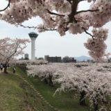 北海道函館市五稜郭公園の桜並木